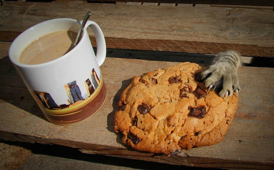 cat paw stealing cookie